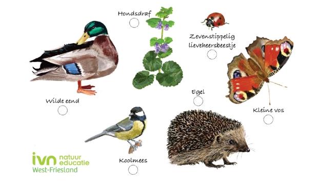 Voorbeeld van een natuur-vindkaart.