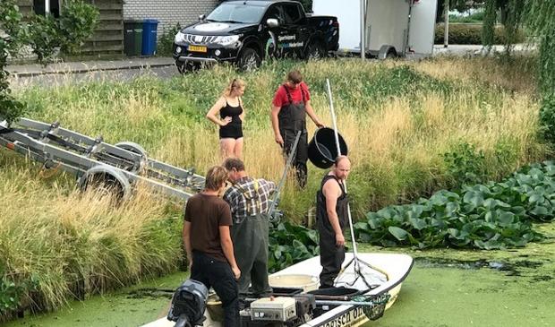 Vrijwillige sportvissers komen in actie om vissen in nood te redden.