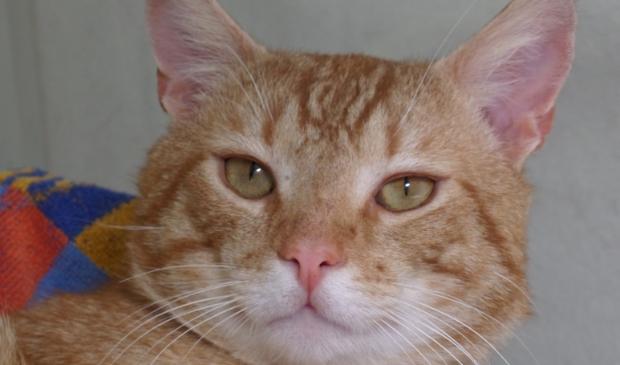 Rufus is een stoere, zelfverzekerde kerel.