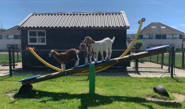 De dieren wachten met smart op de bezoekers!