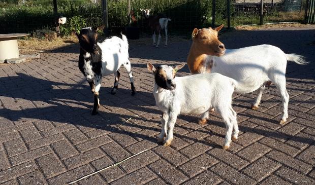 Wijkboerderij De Veldmuis is weer open vanaf 1 juli.