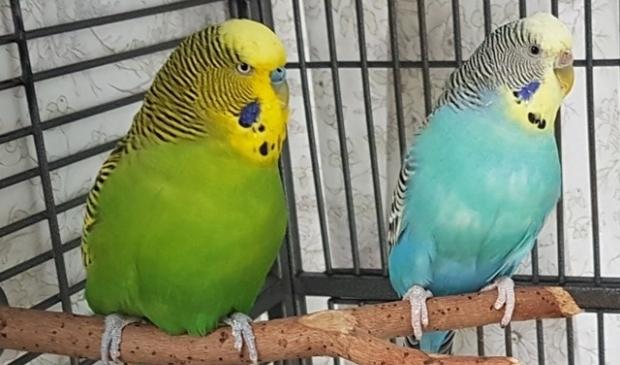 Spike en Skye zijn onafscheidelijk. Wie wordt hun nieuwe baasje?