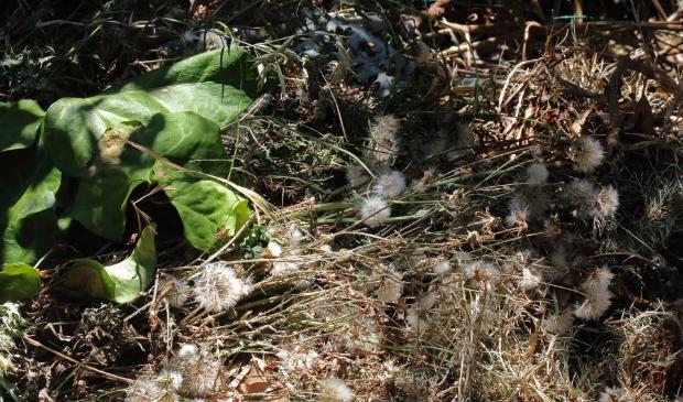 Elke eerste zaterdag van de maand, tuinafval bij Lodder.