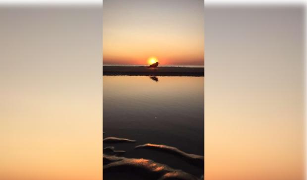 """<p pstyle=""""PLAT"""">Een geweldige zonsondergang waarvan een meeuw getuige is...</p>"""
