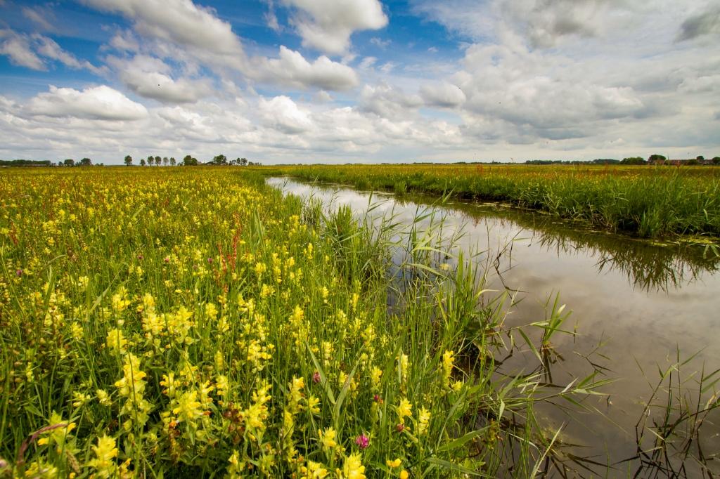 <p>Bloemrijke weilanden beschermd door Landschap Noord-Holland.</p> <p>Foto: Menno Schaefer</p> © rodi