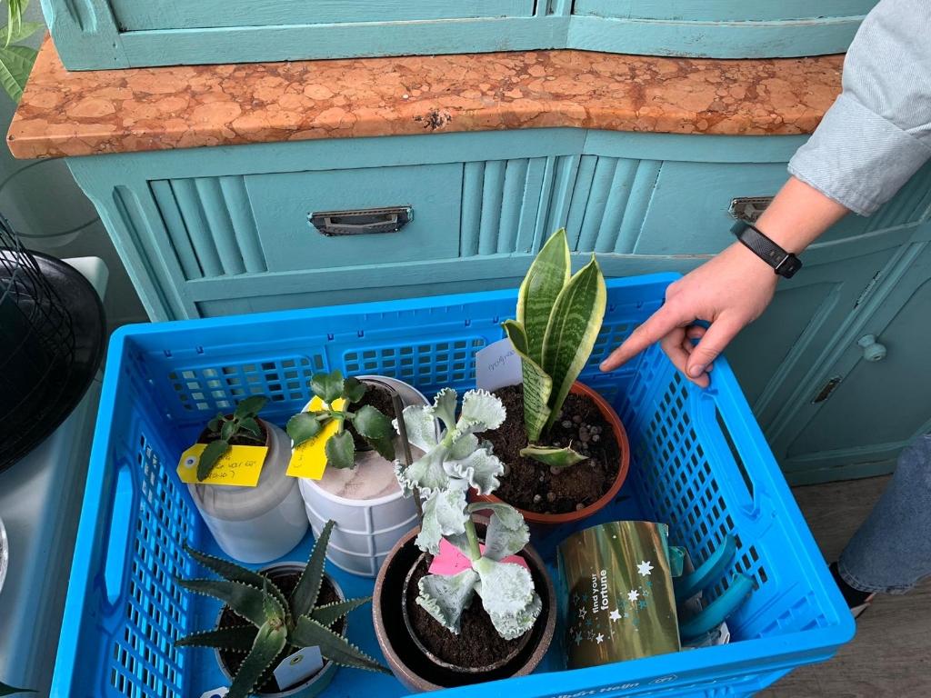 <p>Kijk daar heb je echte zielige planten.</p> (Foto: Yvette van der Does) © rodi