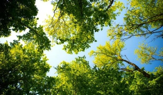 <p><strong><strong>Bomen zijn van groot belang.&nbsp;</strong></strong></p>
