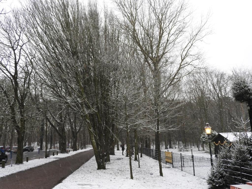 <p>Bomenrij op de Dr. de Jonghweg.</p> <p>(Foto: AT)</p> © rodi