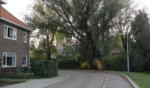 <p>Ben je blij met een scheefgegroeide boom naast je woning? Tijd om te kappen of staat hij er al vele jaren en is er geen gevaar? (archieffoto gemaakt op de Wilgenstraat in Zaandam Zuid)</p>