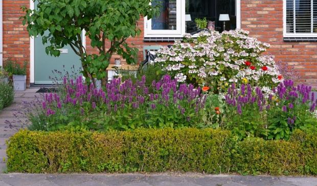 <p>Hortus Alkmaar houdt Inspirerende tuinavonden&nbsp;</p>