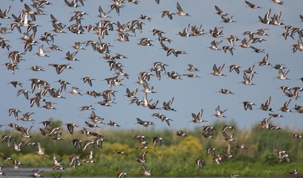 <p>De Schaalsmeerpolder is een zeer vogelrijk gebied in het Wormer- en Jisperveld. Dit is het grootste aaneengesloten veenweidegebied van West-Europa.</p>