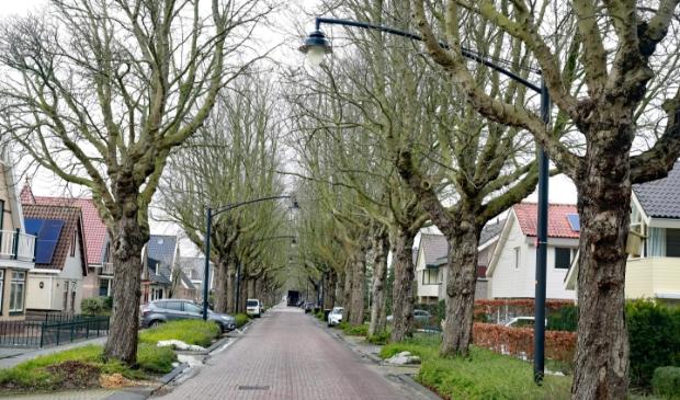 <p>Zieke kastanjebomen aan de Stationsweg</p>