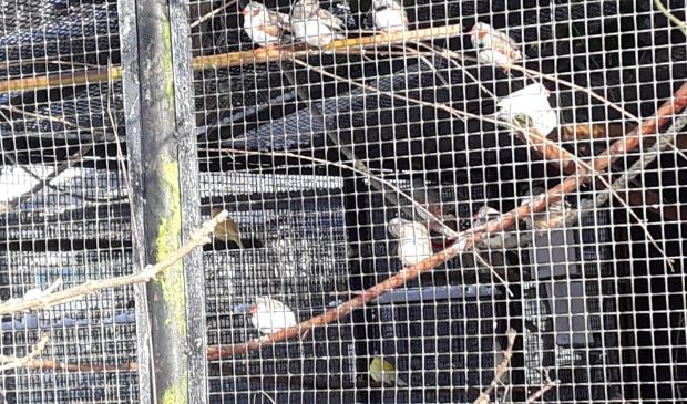 <p>De volièrevogels maken het goed.</p>