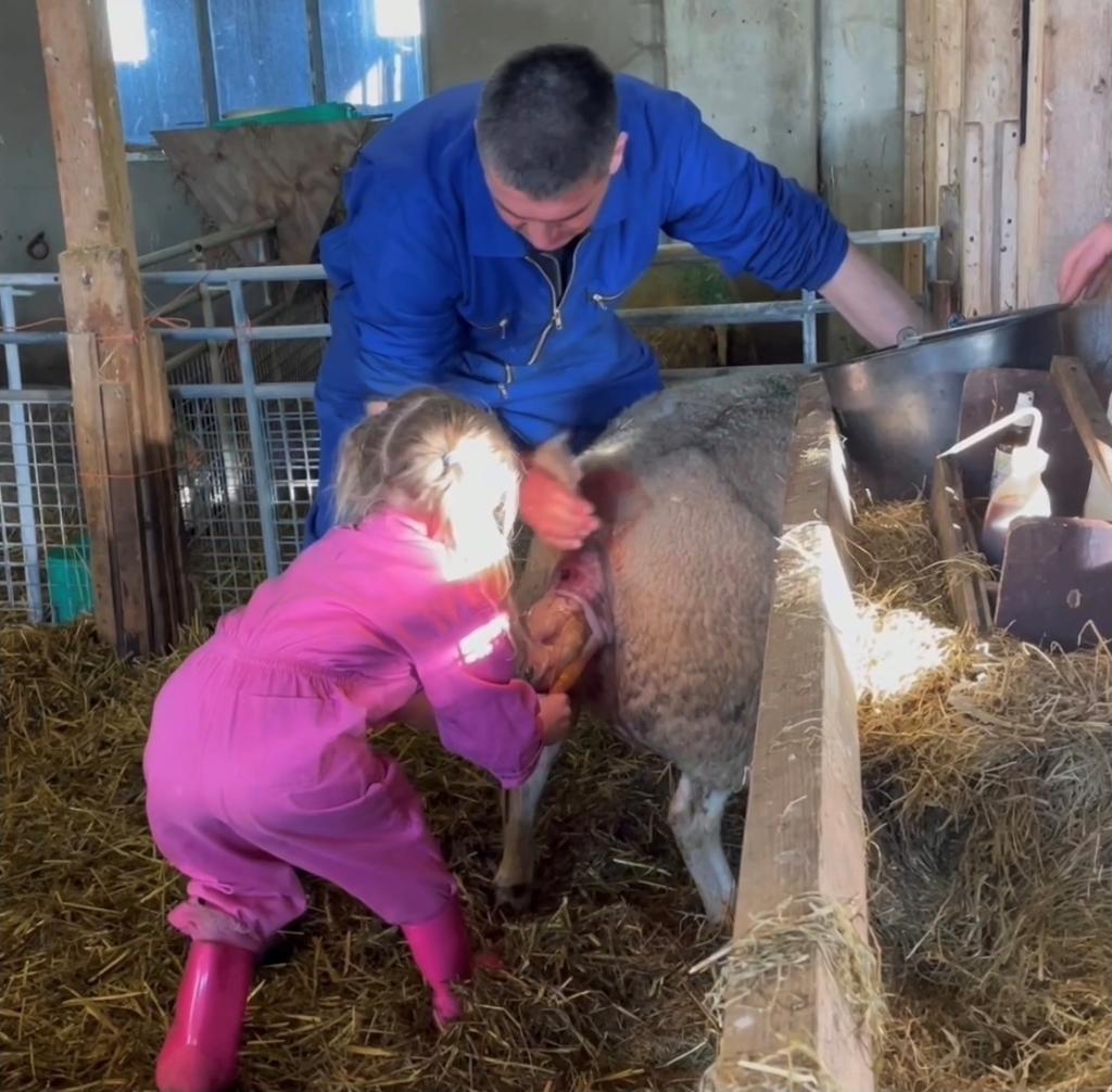 <p>Mara helpt haar vader een lammetje ter wereld brengen.</p> (Foto: aangeleverd) © rodi