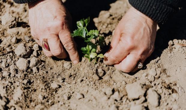 <p>Digitaal tuinieren staat ook op het programma.</p>