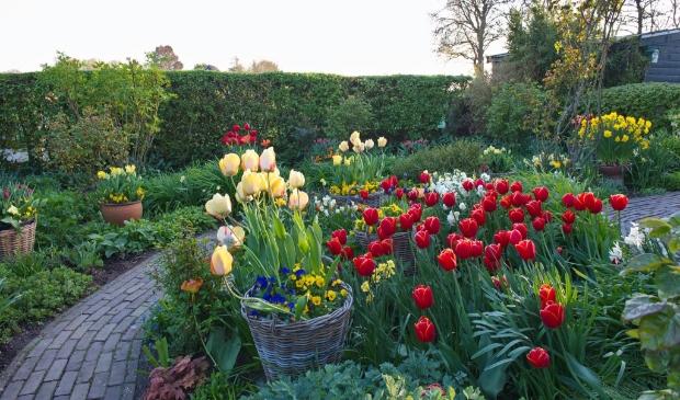<p>De lente laat zich zien in de tuin.</p>