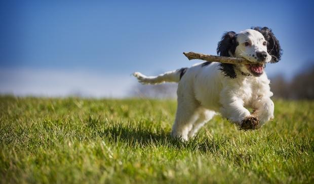 <p>Honden moeten op bepaalde uren worden aangelijnd op het recreatieterrein De Weijver.</p>