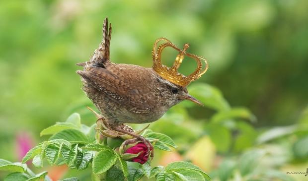 <p>Vind de koning van de tuin,</p>