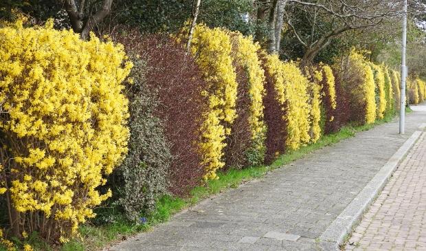 <p>Gele muur op de Cieweg.</p>
