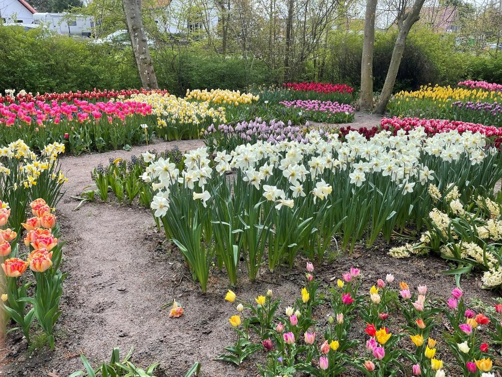 De Poldertuin is zeker tot 20 mei het bezoeken meer dan waard. (Foto: JB/RM) © rodi