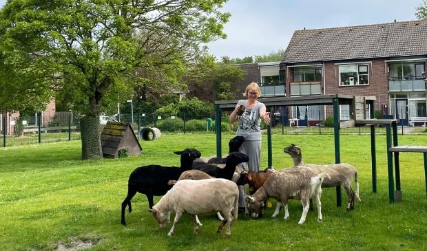 <p>Ingrid voedt de schapen en geiten.</p>