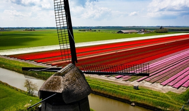 <p>Gedeputeerd Zita Pels noemt de windmolens van grote waarde voor Noord-Holland.</p>