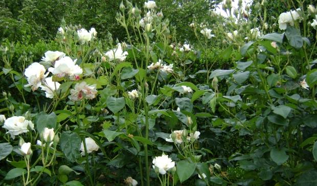 <p>Bezoek de vijf tuinen op Wieringen.&nbsp;</p>