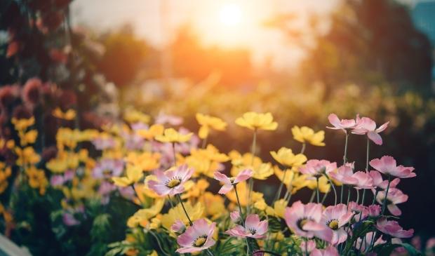 <p>Geef de tuin een zomerse look!</p>