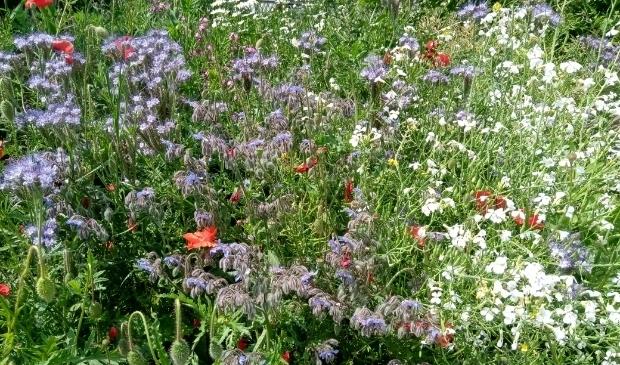 <p>Zaterdag 26 juni kunt u vele mooie bloemen aanschouwen.</p>