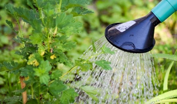 Door op warme dagen een gieter te gebruiken in plaats van een tuinslang, bespaar je een hoop water.