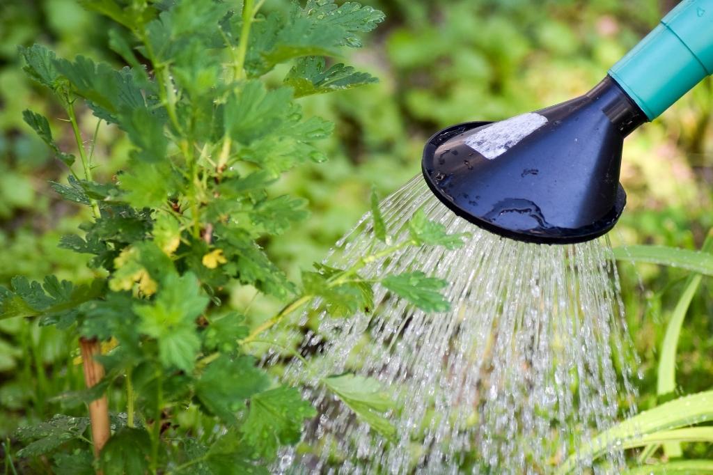 Door op warme dagen een gieter te gebruiken in plaats van een tuinslang, bespaar je een hoop water. (Foto: Aangeleverd) © rodi
