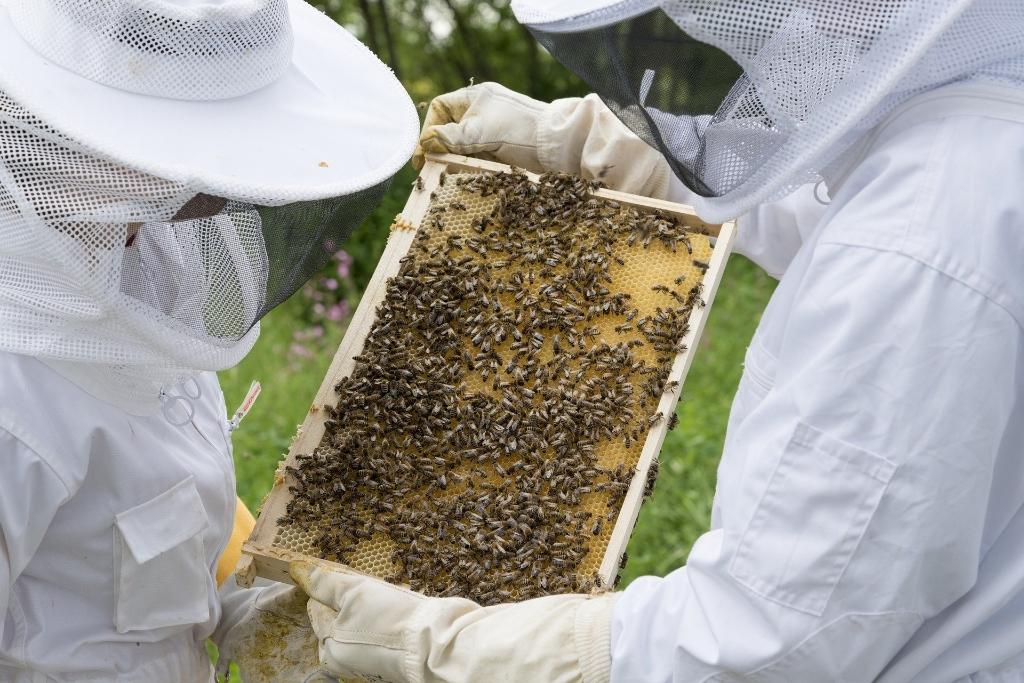 <p>Veilig in een bijenpak zal je merken dat bijen helemaal niet eng zijn.</p>