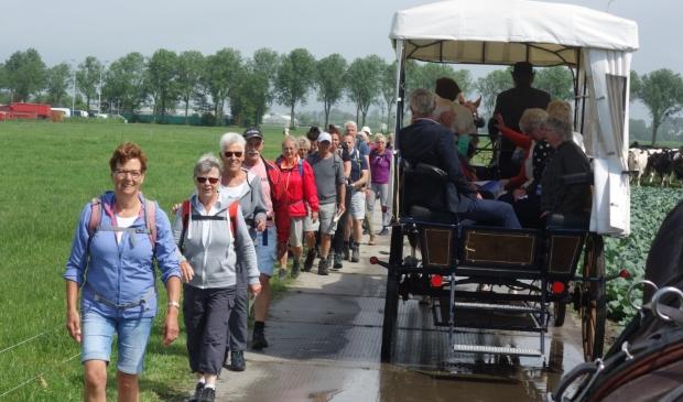 <p>Wandelaars en huifkar passeren elkaar tijdens de tocht door de Noordender polder.</p>