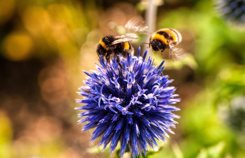 Laat de bijen maar komen. (Foto: Pexels) © rodi