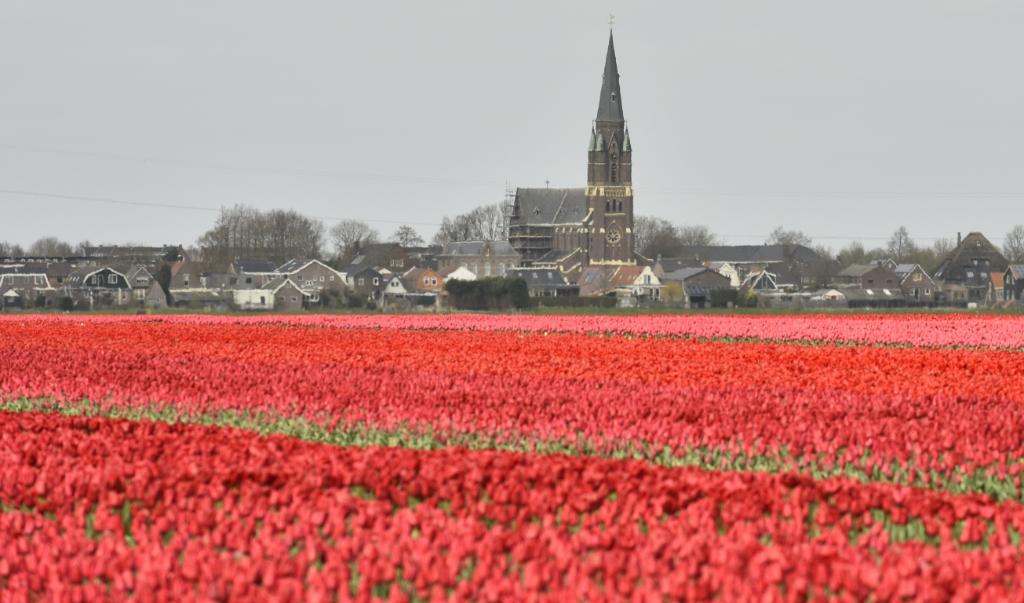 Dé skyline van Wervershoof. (Foto: Anja en Gerard fotografie) © rodi