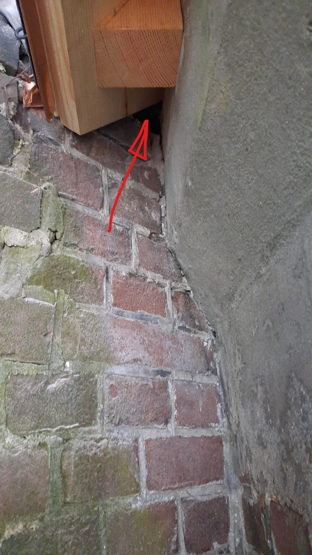 De kleine gaten waar de vleermuizen zitten. (Foto: Co Wiskerke) © rodi