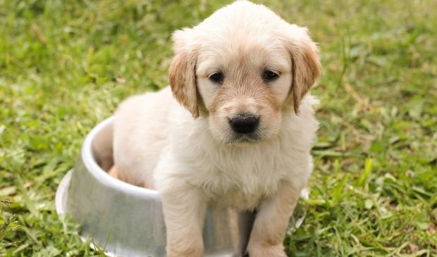 <p>Gemeente Waterland stelt gratis hondenpoepzakjes ter beschikking.</p>