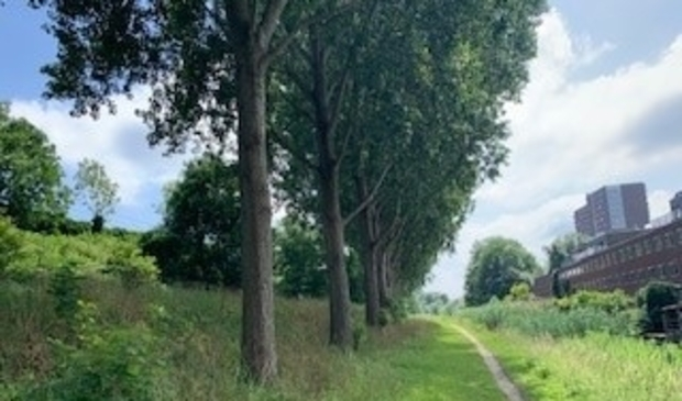 <p>Het pad langs de spoordijk is een walhalla voor loslopende honden.</p>