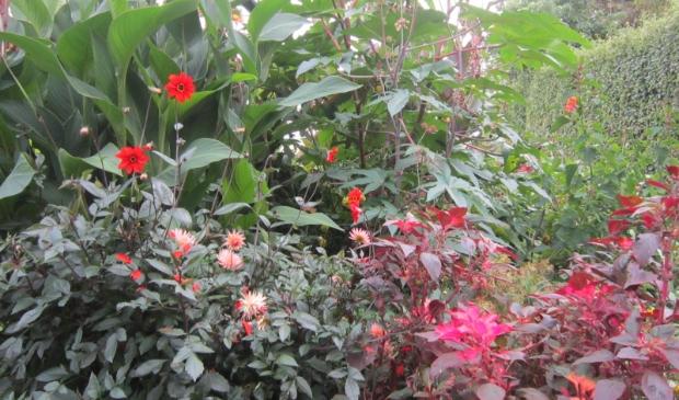 <p>Heerlijk kijken bij andere tuinliefhebbers en vol inspiratie huiswaarts keren. </p>