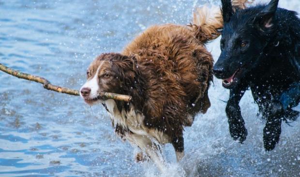 Voorkomt ziekte bij uw hond en laat ze niet los in de buurt van water.