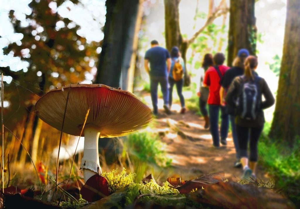 Op zoek naar mooie paddenstoelen. (Foto: aangeleverd) © rodi