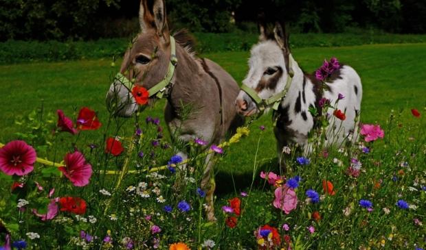 <p>Vier dierendag in Hertenkamp Enkhuizen.</p>