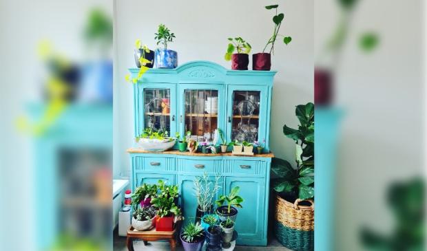 <p>Vijf planten in de aanbieding, adopteer ze bij Plantenasiel </p>