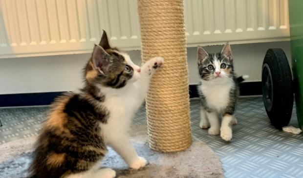 <p>Schattige kittens zoeken een baasje.</p>