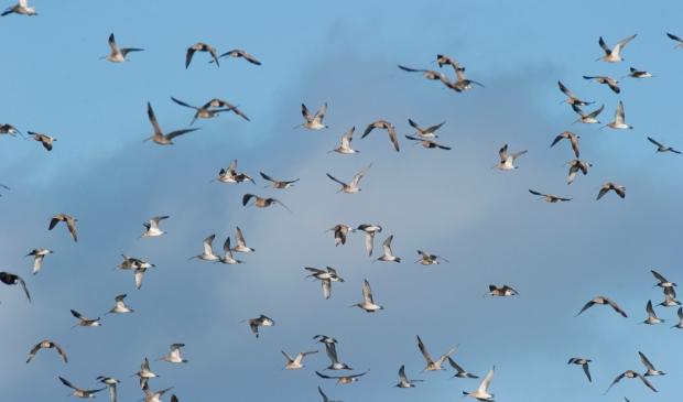"""<p pstyle=""""PLAT"""">Het mysterie van de vogeltrek&nbsp;</p>"""