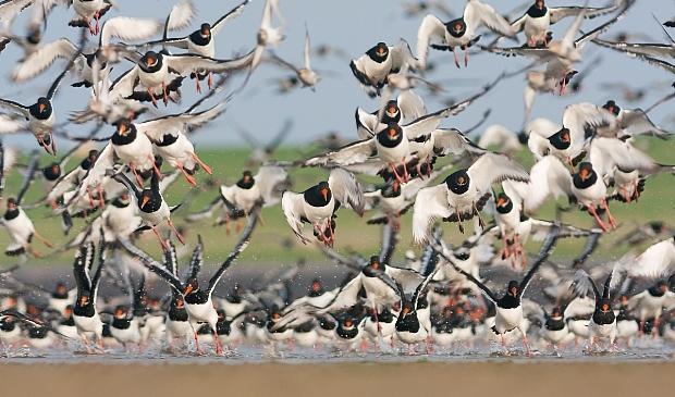 <p>Het is heel belangrijk om vogels niet onnodig te verstoren.</p>
