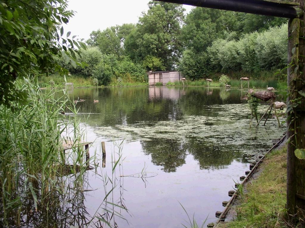 Eendenkooi van der Eng. ((Foto: Landschap Noord-Holland)) © rodi