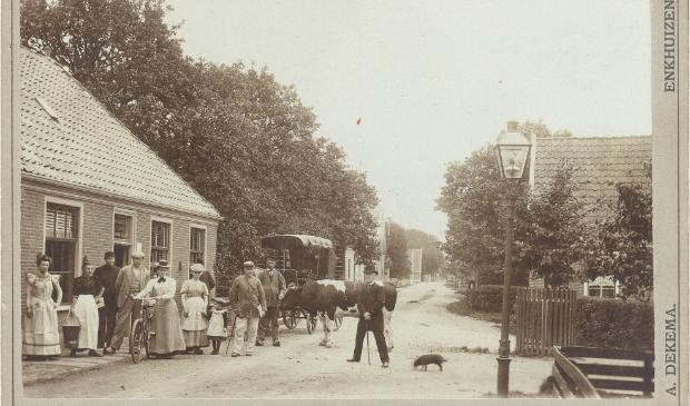 <p>Een stier, deze wordt vastgehouden door de bulloper. De foto is gemaakt in Venhuizen rond 1900.&nbsp;</p>