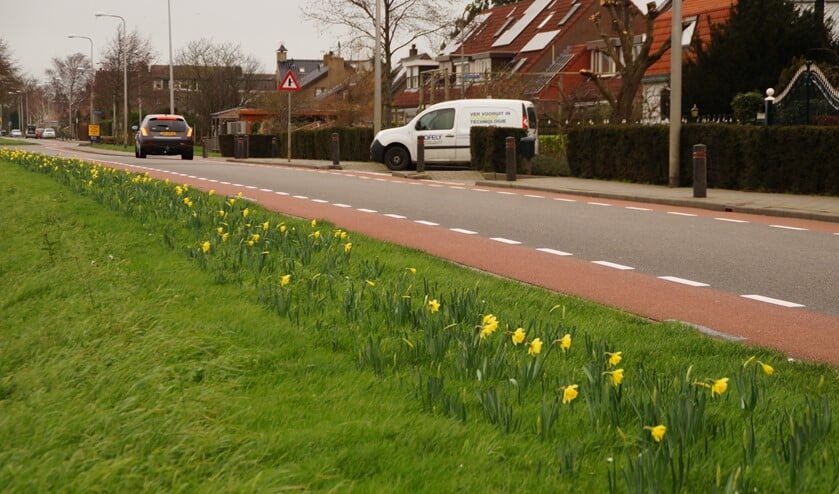 Aan de Kerkweg in Zuidland bloeien de narcissen al. Foto: Teun Kweekel.