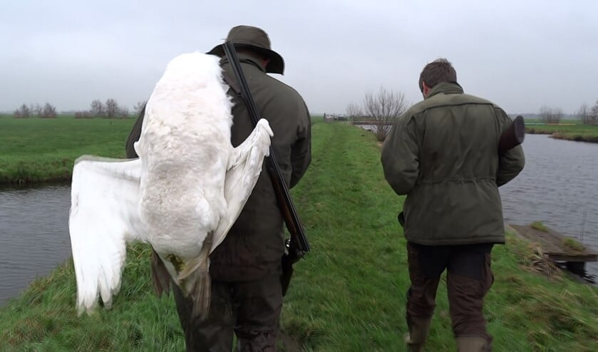 Jagers met geschoten zwanenkind